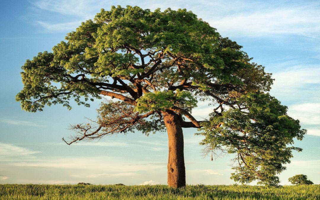 Glasaj za Europsko stablo godine!