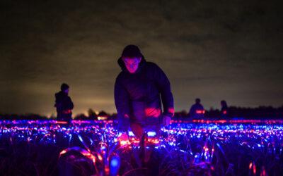 LED rasvjetom do boljeg rasta usjeva
