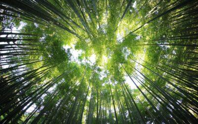 Kreni zelenim putem Ininog Zelenog pojasa