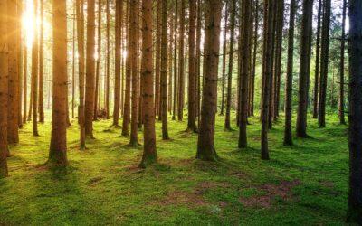 Velike korporacije ujedinjene u borbi za zaštitu šuma