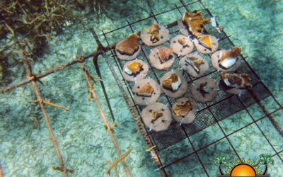 Uništenim koraljima podaren novi život