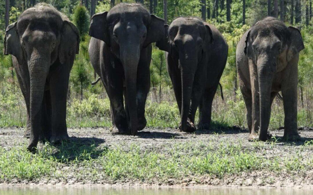 Slonovi zaslužili mirovinu