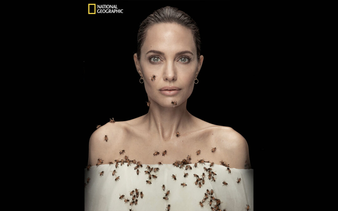 Angelina Jolie borkinja za zaštitu pčela