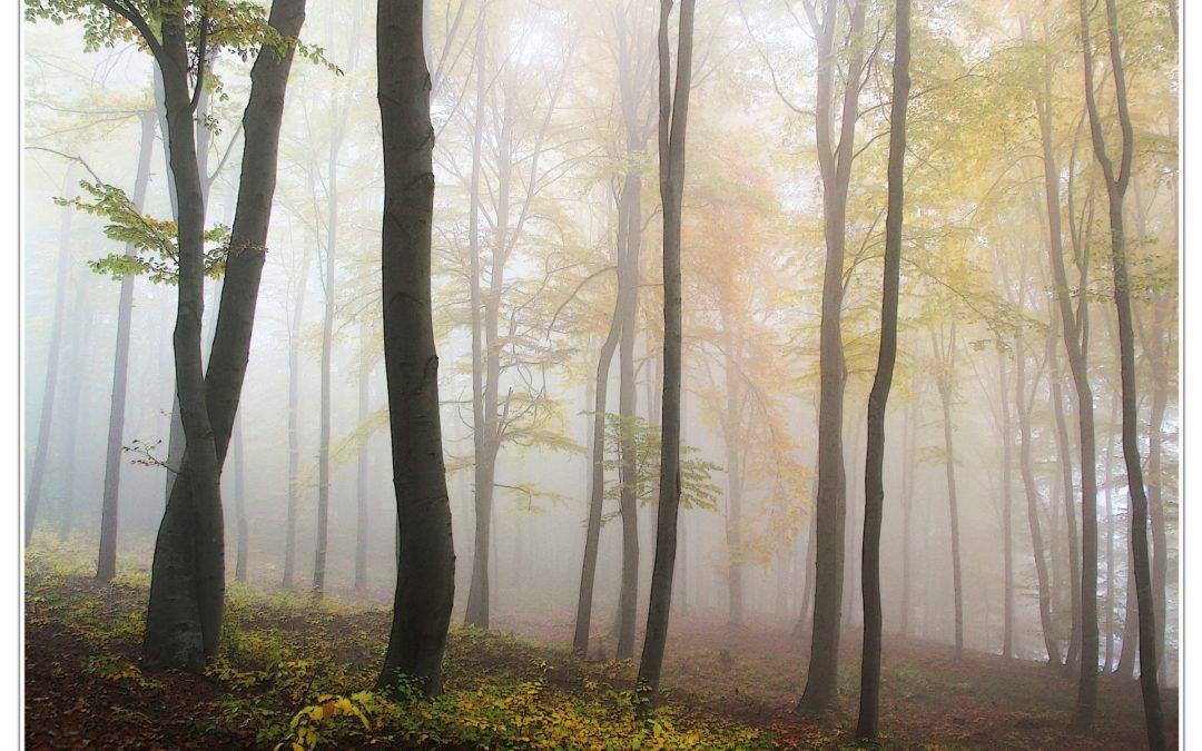 Uhvati kamerom Sjećanja jedne šume
