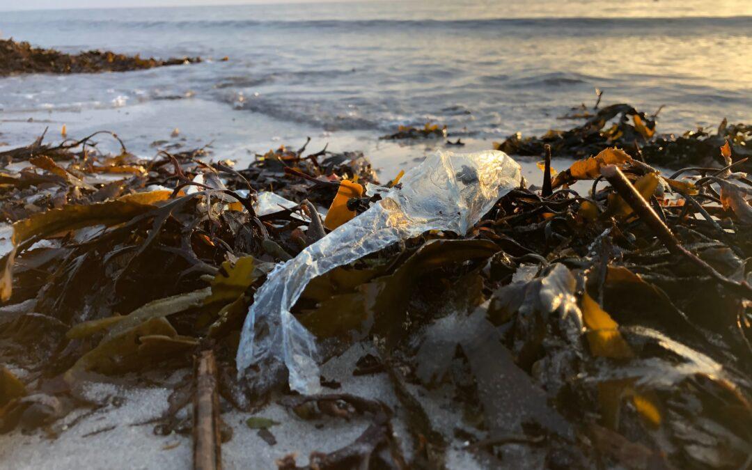 Alge u borbi za smanjenje klimatskih promjena