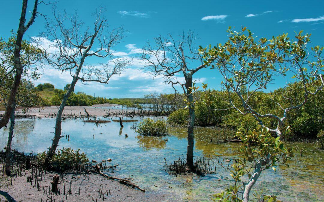Kako su šume mangrova pomogle u sprječavanju ekocida