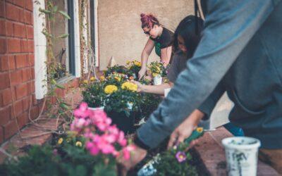 Osim apartmana iznajmite i vrt!